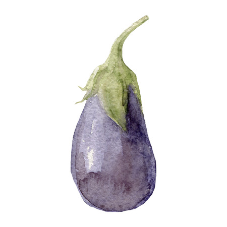 aubergine: Watercolor illustration of aubergine isolated on white