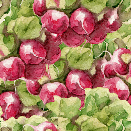 Watercolor pattern with radish. Hand drawn background. Stock Photo