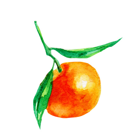 Mandarin illustration. Hand drawn watercolor on white background. Stock Photo