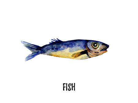 coho: fish illustration. Hand drawn watercolor on white background. Stock Photo