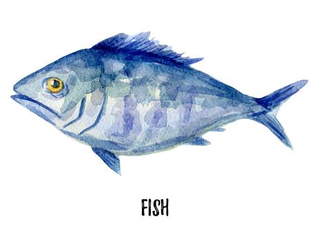mackerel: fish illustration. Hand drawn watercolor on white background. Stock Photo