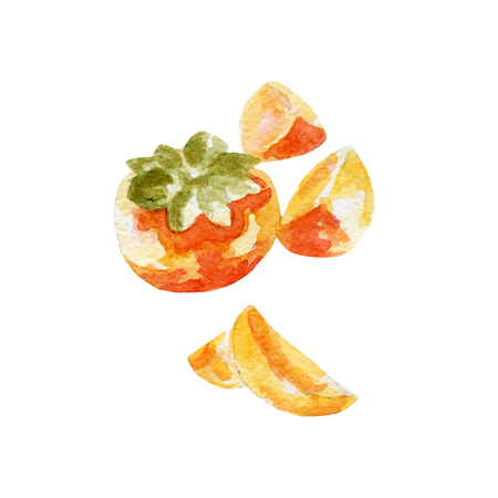 persimmon: fresh persimmon illustration. Hand drawn watercolor on white background Stock Photo