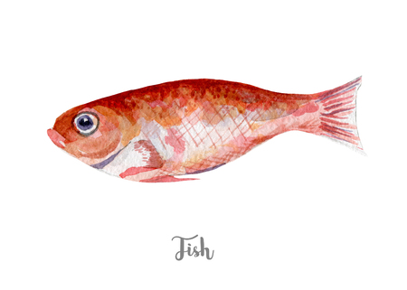 fresh fish illustration. Hand drawn watercolor on white background. Stock Photo