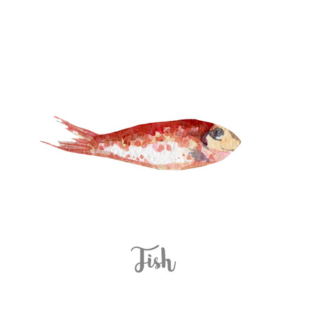 fresh fish illustration. Hand drawn watercolor on white background. Reklamní fotografie - 79554064