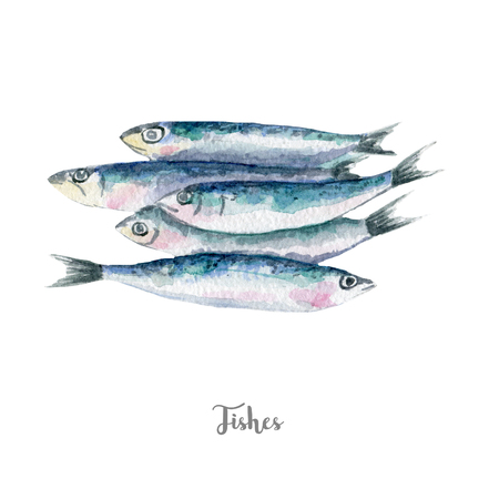 fresh fish illustration. Hand drawn watercolor on white background