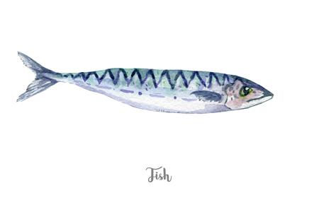 fish illustration. Hand drawn watercolor