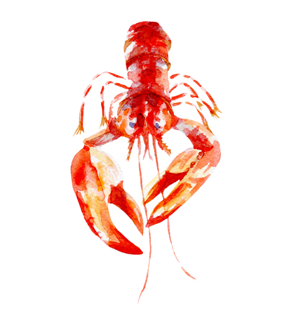 fresh lobster illustration. Hand drawn watercolor on white background.