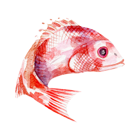fresh fish illustration. Hand drawn watercolor on white background. Reklamní fotografie