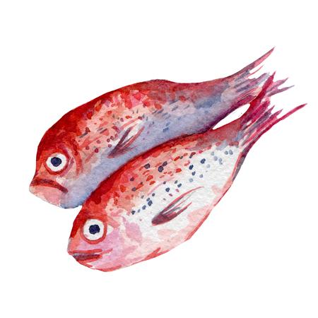 mackerel: fresh fish illustration. Hand drawn watercolor on white background. Stock Photo