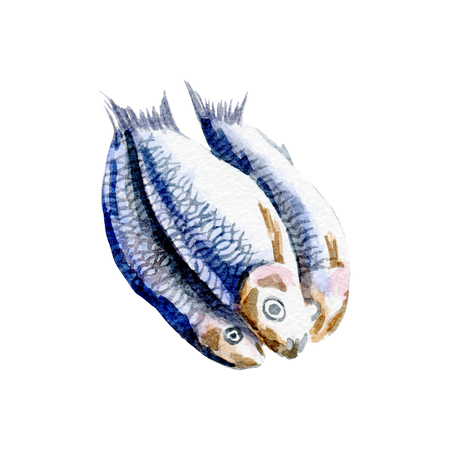 fresh fish illustration. Hand drawn watercolor on white background. Banco de Imagens