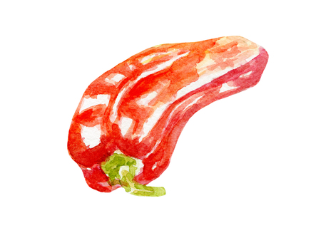 fresh pepper illustration. Hand drawn watercolor on white background.