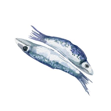 fresh fish illustration. Hand drawn watercolor on white background. Reklamní fotografie - 80481162