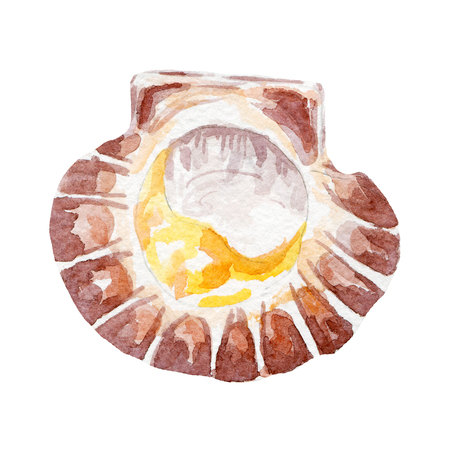 fresh clam illustration. Hand drawn watercolor on white background. Stock Photo