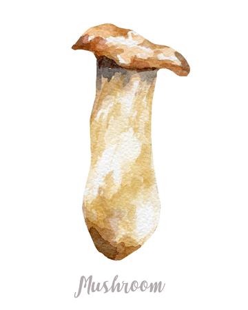 champignon: Watercolor hand drawn mushroom. Isolated illustration on white background