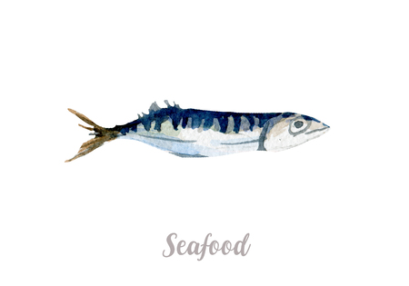 Watercolor hand drawn fish. Isolated fresh seafood illustration on white background Reklamní fotografie