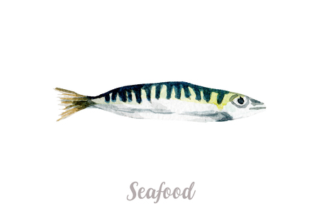 dorado: Watercolor hand drawn fish. Isolated fresh seafood illustration on white background Stock Photo