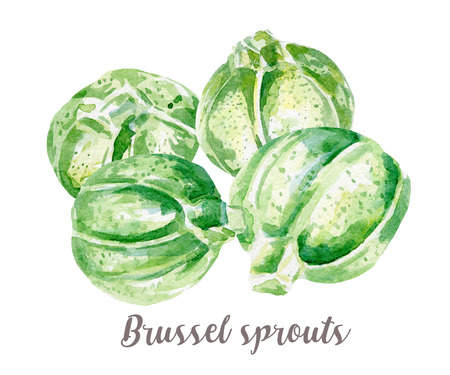 Brussel sprouts illustration. Hand drawn watercolor on white background. Stock Photo