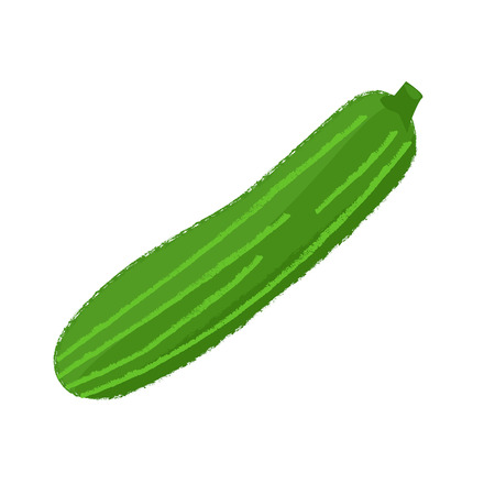 Zucchini on white background. Vector Vettoriali