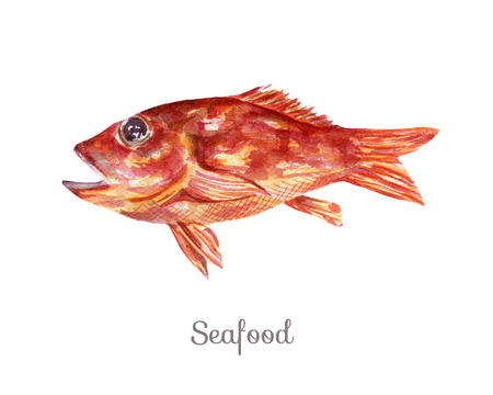 Watercolor seafood Clipart - fish