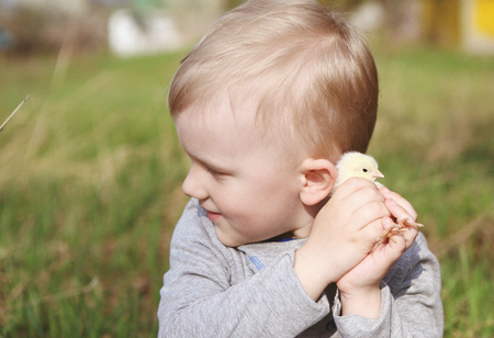 a little boy playing with a young fluffy chicken and gently stroking his cheeks and cheeks