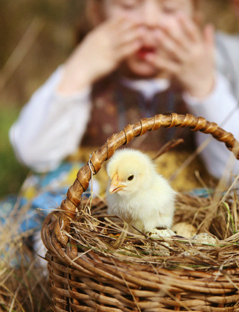 child looks up at a young fluffy yellow chicken in a basket with eggs for Easter