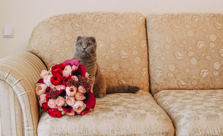 gray big cat on the couch sniffing a bouquet of flowers roses Stock Photo
