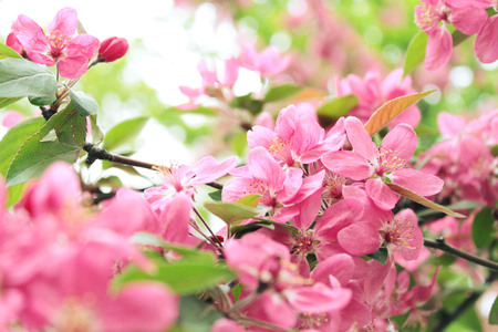 spring pink flowers in the morning blossomed