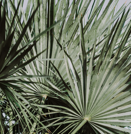 palm plant leaves tropical natural against the sky