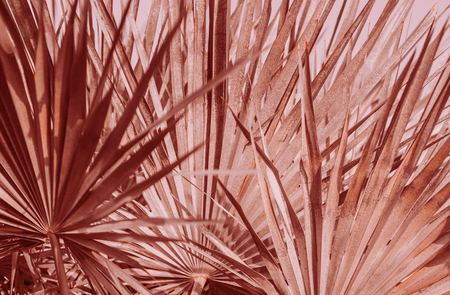 palm leaves subtle graphics background red tropical
