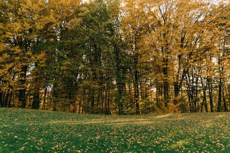 trees deciduous forest with yellowed foliage sunny day landscape
