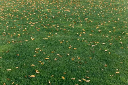 green grass and yellow fallen leaves together season specifics spring autumn Фото со стока