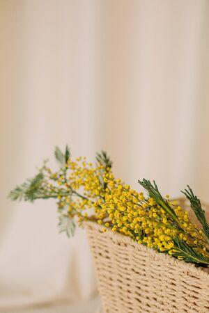 Acacia dealbata holiday vase flowers freshness bright mock up bouquet