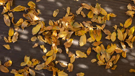 yellow fallen leaves on a wooden floor outside on a terrace