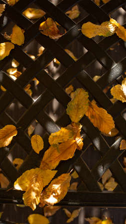 outdoor furniture close up structure fallen leaves season autumn