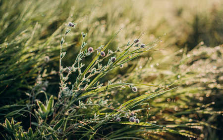 dew on meadow green grass morning freshness and dawn