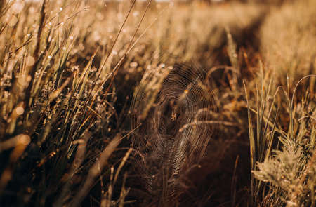 spider web in the grass on a sunset yellow background meadow