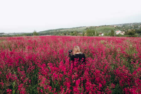 photographer woman sitting on a field full of pink flowers Reklamní fotografie