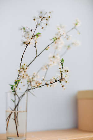 shadow cherry flowering branch natural in a vase home decor spring background