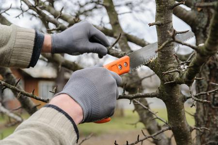 Werk in de tuin. Man snijden van takken van bomen en bessenstruiken met behulp van de