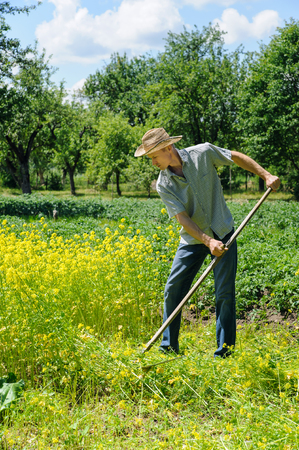 A man is mowing a mustard grass with spit. Stock fotó