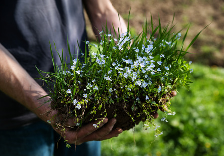 Human hand holding a piece of soil with grass and flowers