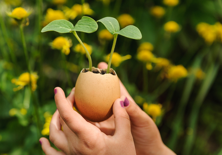 Cucumber sprouts growing from an egg shell. Childrens hands hold it