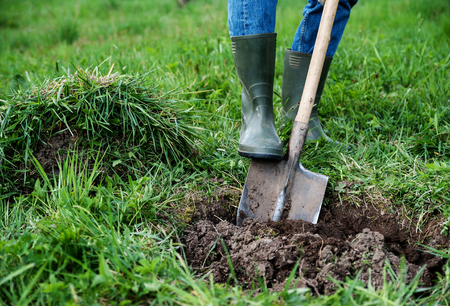 Man digs a hole in the ground for planting trees Stock Photo