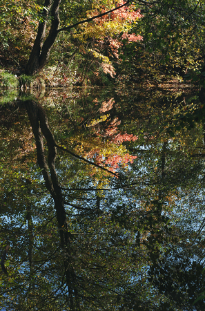 Autumn landscape. Yellow leaves and trees reflected in water