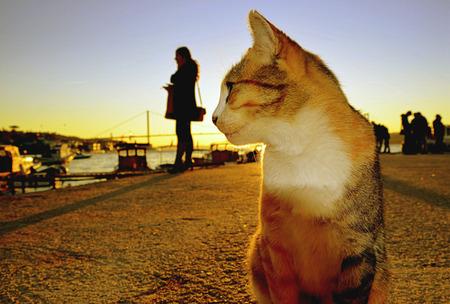Dusk Cats photo