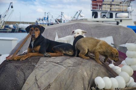 redes de pesca: Istanbul, Turquía . Rumeli faro en pueblo de pescadores, se ve que juega el perro cachorro en redes de pesca.