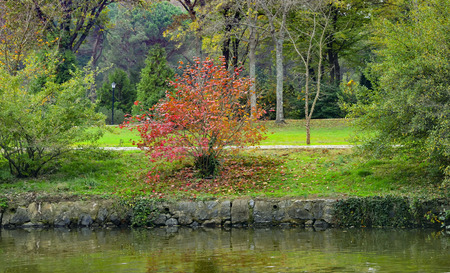 look after: Istanbul Ataturk arboretum, lake and trees in autumn look. After the summer, before winter, autumn.