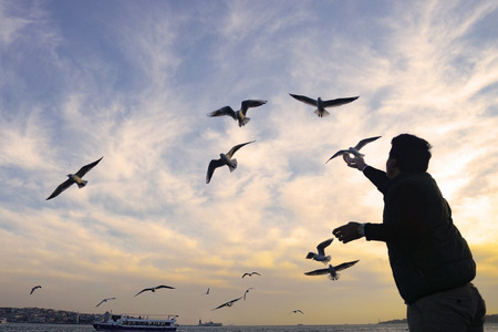 Sunset seagulls and people silhouette. Stock Photo