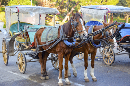 Buyukada, Phaeton (carriage). Buyukada, Princes' Islands, also known as Istanbul is the largest of the islands off the coast.
