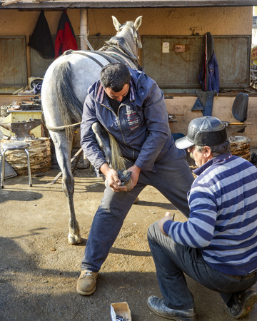 smithery: Istanbul, Turkey - December 18, 2013: Farrier. Horses hoof nailing on shoes. Nail care of the horses phaeton car on Buyukada and master farrier who shoe. A farrier is a specialist in equine hoof care, including the trimming and balancing of horses hoove